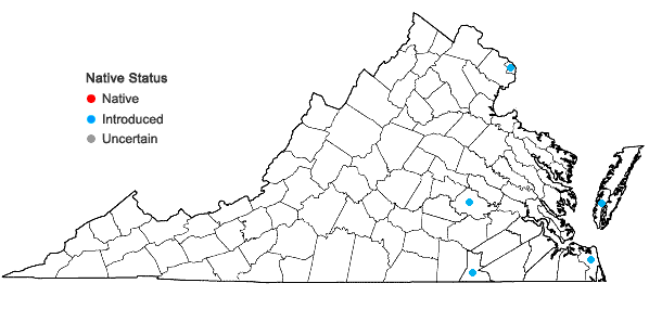 Locations ofAcanthospermum australe (Loefl.) Kuntze in Virginia
