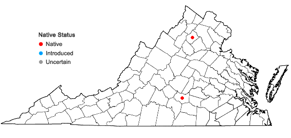 Locations ofAcaulon muticum (Hedw.) Müll. Hal. var. rufescens (A. Jaeger) H.A. Crum in Virginia