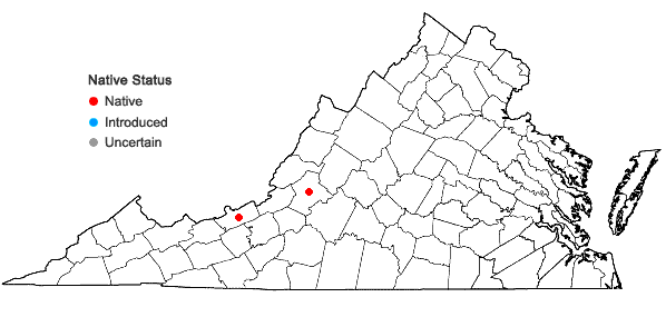 Locations ofAcaulon triquetrum (Spruce) Müll. Hal. in Virginia