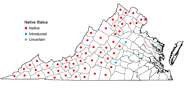 Locations ofAcer saccharum Marshall var. saccharum in Virginia