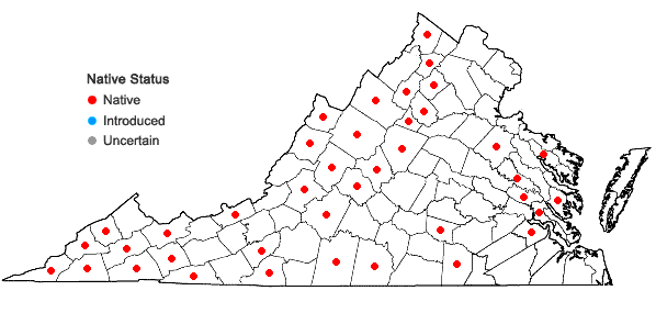 Locations ofActaea pachypoda Ell. in Virginia