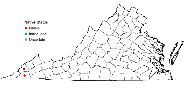 Locations ofActaea rubifolia (Kearney) Kartesz in Virginia