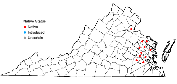 Locations ofAeschynomene virginica (L.) B.S.P. in Virginia