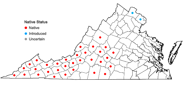 Locations ofAesculus flava Ait. in Virginia