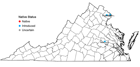 Locations ofAesculus pavia L. var. pavia in Virginia