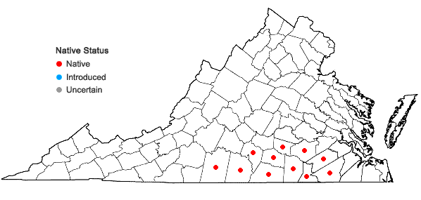 Locations ofAesculus sylvatica Bartr. in Virginia