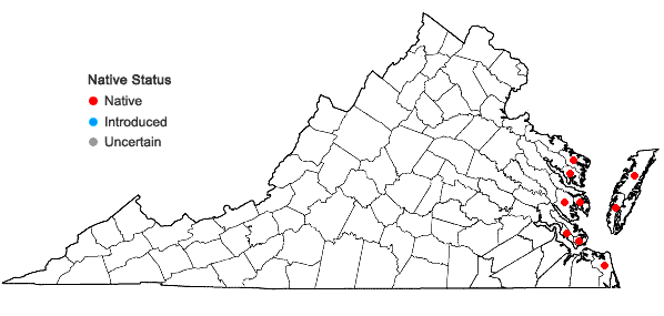 Locations ofAgalinis maritima (Raf.) Raf. var. maritima in Virginia