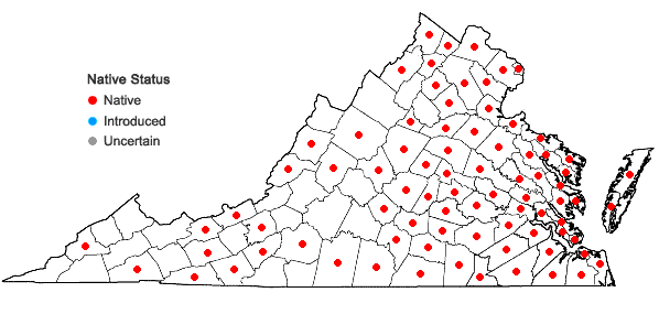 Locations ofAgalinis purpurea (L.) Pennell in Virginia