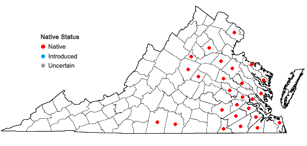 Locations ofAgalinis setacea (J.F. Gmel.) Raf. in Virginia