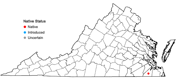 Locations ofAgalinis virgata Raf. in Virginia