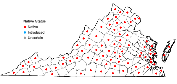 Locations ofAgrimonia pubescens Wallr. in Virginia