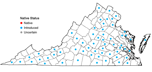 Locations ofAgrostemma githago L. in Virginia