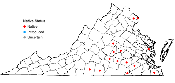 Locations ofAgrostis elliottiana J.A. Schultes in Virginia