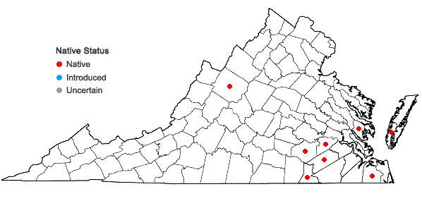 Locations ofAgrostis perennans (Walt.) Tuckerman var. elata (Pursh) Hitchc. in Virginia