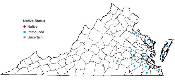 Locations ofAira praecox L. in Virginia