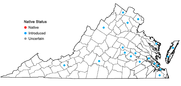 Locations ofAjuga reptans L. in Virginia