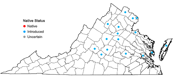 Locations ofAkebia quinata (Houtt.) Dcne. in Virginia