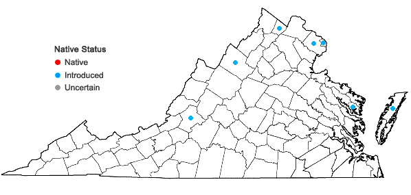 Locations ofAlcea rosea L. in Virginia