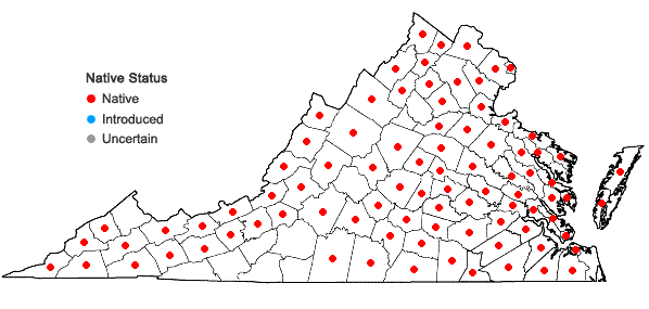 Locations ofAlisma subcordatum Rafinesque in Virginia