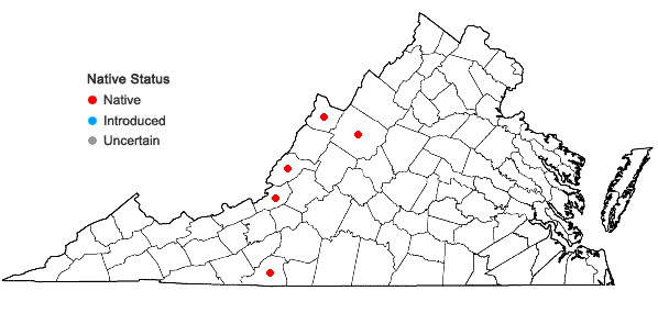 Locations ofAllium oxyphilum Wherry in Virginia