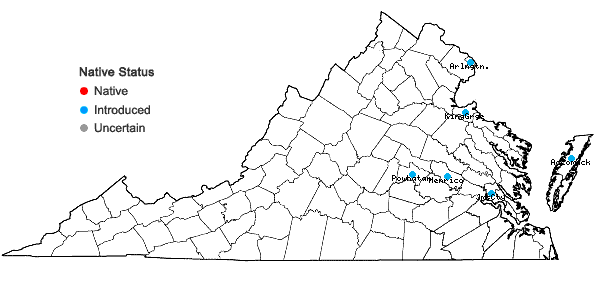 Locations ofAlopecurus myosuroides Huds. in Virginia