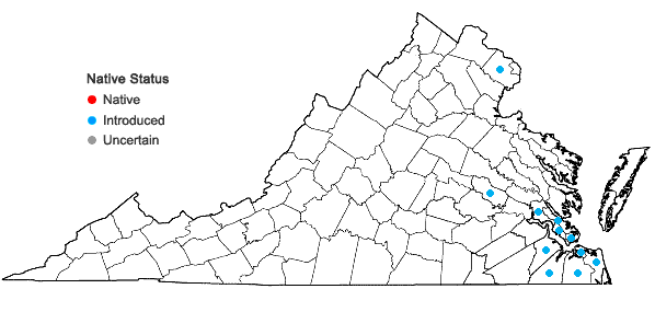 Locations ofAlternanthera philoxeroides (Mart.) Griseb. in Virginia