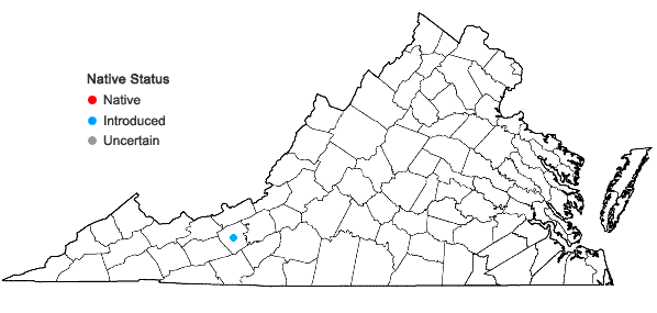 Locations ofAmaranthus australis (Gray) Sauer in Virginia