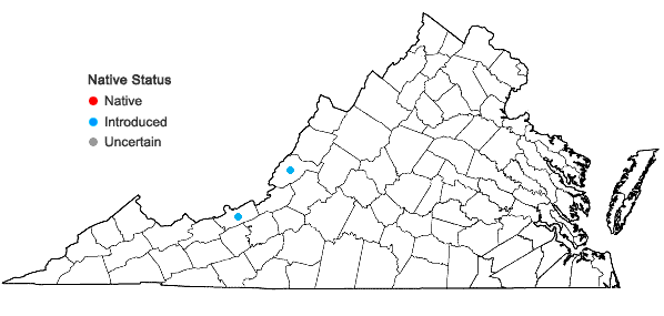 Locations ofAmaranthus cruentus L. in Virginia