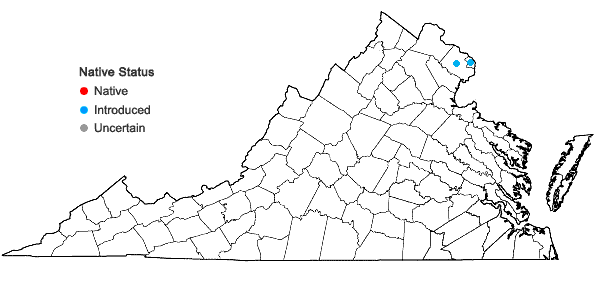 Locations ofAmaranthus deflexus L. in Virginia