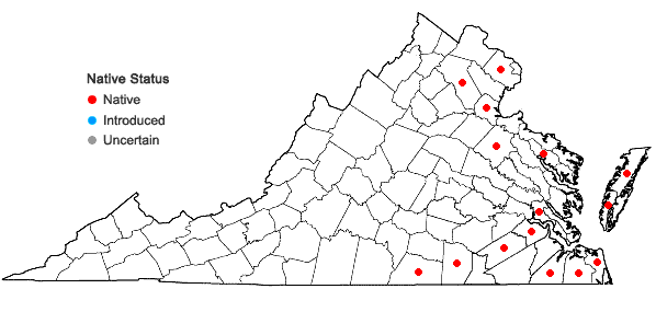 Locations ofAmmannia latifolia L. in Virginia