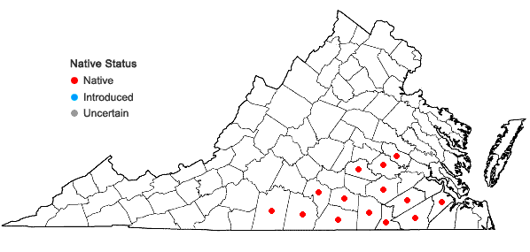 Locations ofAmsonia tabernaemontana Walt. var. tabernaemontana in Virginia