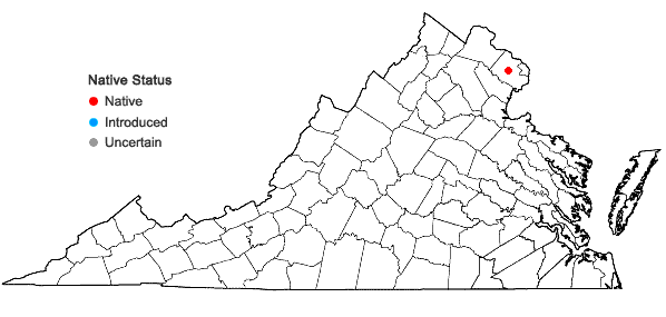 Locations ofAnagallis minima (L.) Krause in Virginia