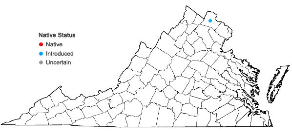 Locations ofAnchusa arvensis (L.) Bieb. in Virginia