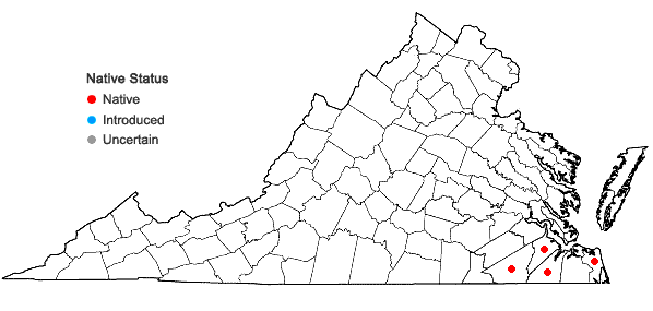 Locations ofAndropogon glaucopsis Ell. in Virginia