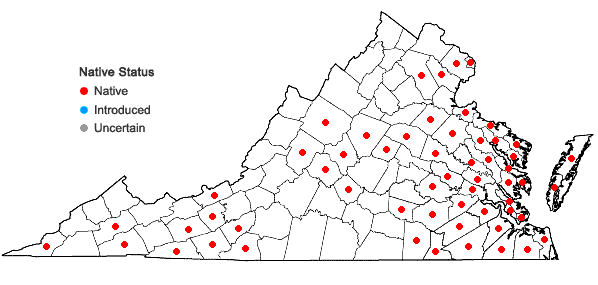 Locations ofAndropogon glomeratus (Walt.) B.S.P. var. glomeratus in Virginia