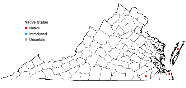 Locations ofAndropogon glomeratus (Walt.) B.S.P. var. pumilus (Vasey) Dewey in Virginia