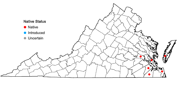 Locations ofAndropogon glomeratus (Walt.) B.S.P. var. hirsutior (Hack.) C. Mohr in Virginia