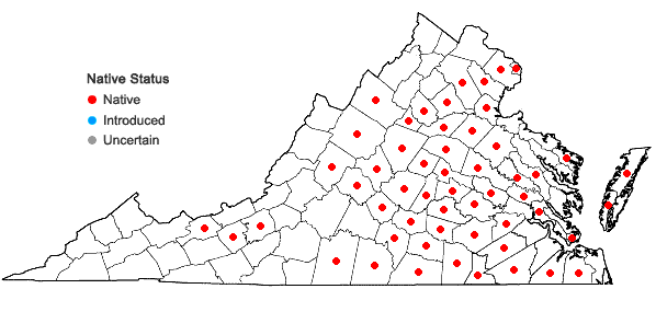 Locations ofAndropogon gyrans Ashe in Virginia