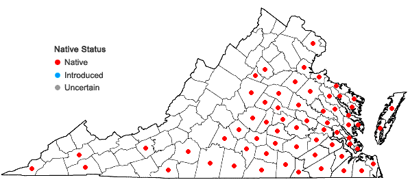 Locations ofAndropogon ternarius Michx. var. ternarius in Virginia