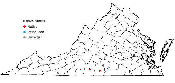 Locations ofAnemone berlandieri Pritz. in Virginia