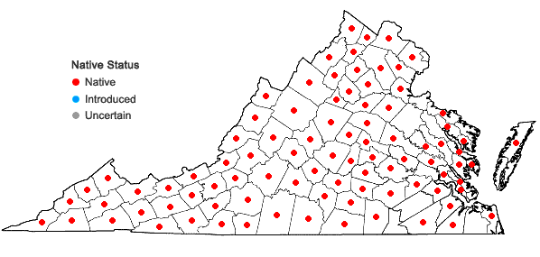 Locations ofAnemone virginiana L. var. virginiana in Virginia