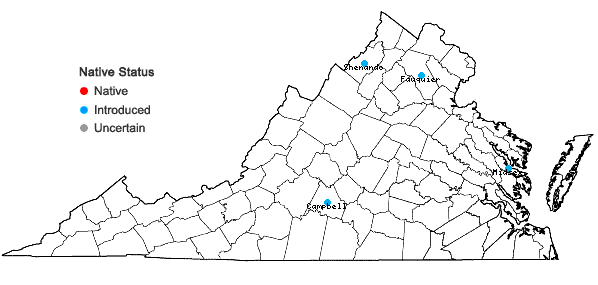Locations ofAnethum graveolens L. in Virginia