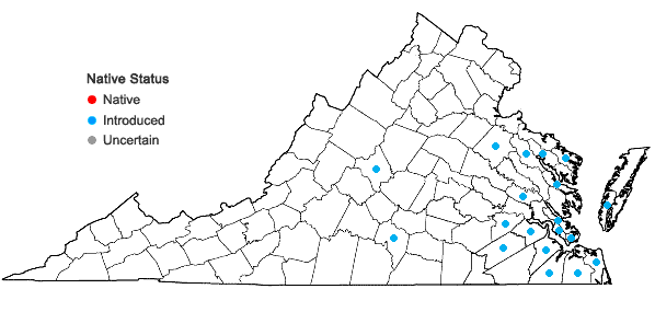 Locations ofAnoda cristata (L.) Schlecht. in Virginia
