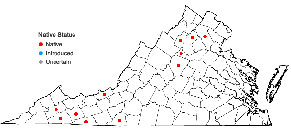 Locations ofAnomodon rugelii (Müll. Hal.) Keissl. in Virginia