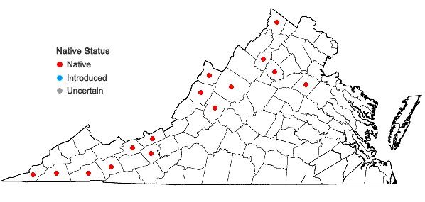 Locations ofAnomodon viticulosus (Hedw.) Hooker & Taylor in Virginia