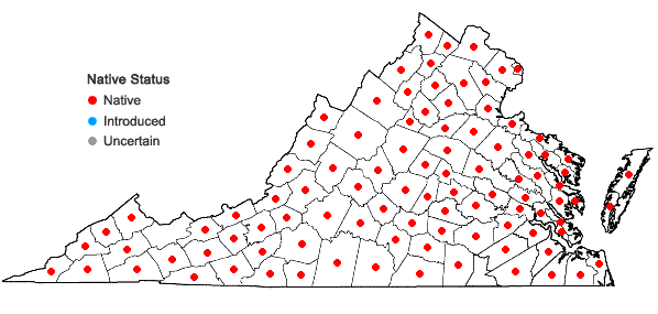 Locations ofAntennaria plantaginifolia (L.) Richards. in Virginia