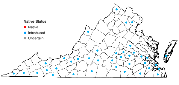 Locations ofAnthemis cotula L. in Virginia