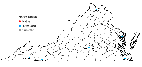 Locations ofAnthoxanthum aristatum Boiss. in Virginia