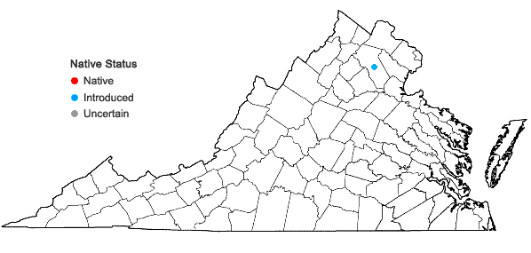 Locations ofAnthriscus cerefolium (L.) Hoffmann in Virginia