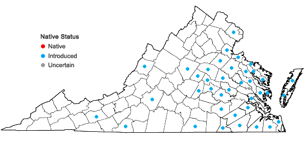 Locations ofAphanes australis Rydberg in Virginia
